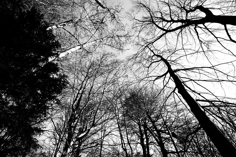 Trees, Plants, Flowers... by Laurent Orseau #93